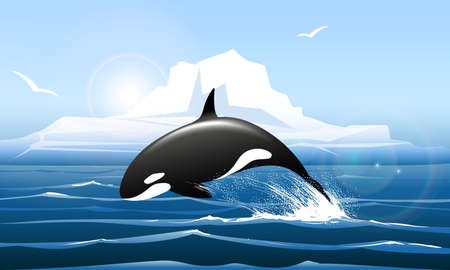 Arctic Landscape with Orca jumps out of the water. Vector illustration.