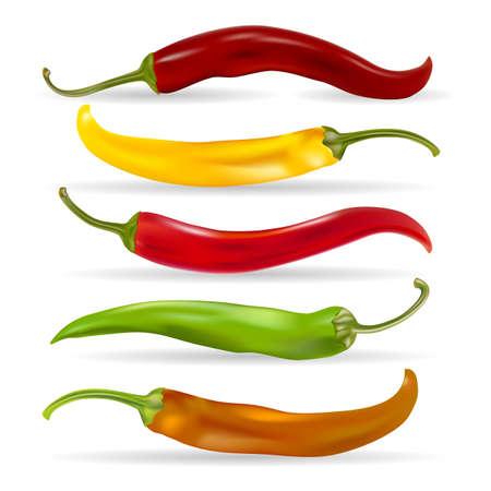 Realistic Detailed Various Hot Chili Pepper Set. Vector illustration.