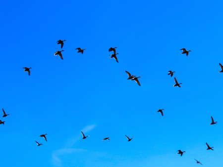 pajaros volando: las aves que vuelan Foto de archivo