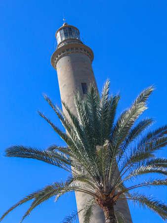 Maspalomas lighthouse with palm tree