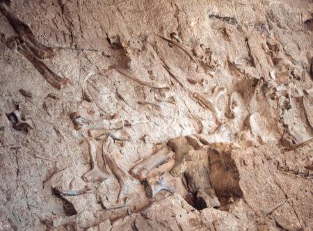 Dig site of dinosaur bones in Jensen, Utah