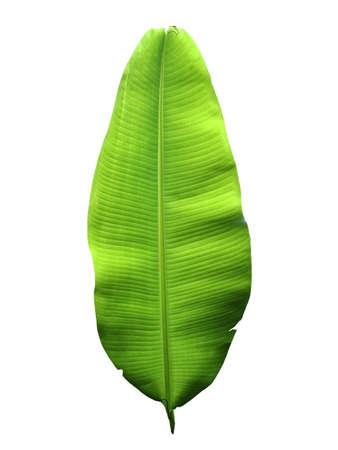 banana leaf: hoja de pl�tano son los antecedentes de los blancos