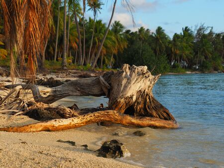 French Polinesia lonly beach with old trunk, during sunset