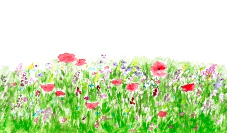 Summer Flowers Watercolor Isolated on White, Border Seamless Pattern photo