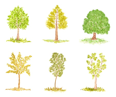 poplar: Set of Trees, Watercolor Hand Drawn and Painted, Isolated on White