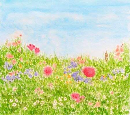 Summer Flowers on Daylight Meadow, Watercolor Hand Drawn and Painted photo