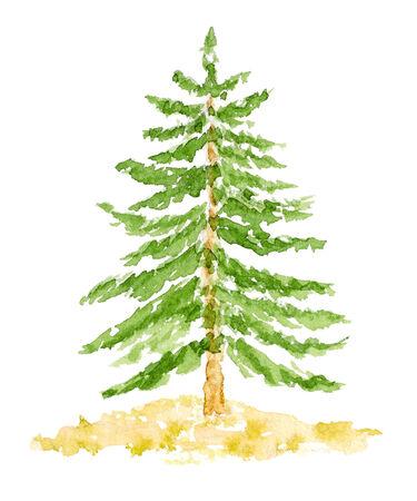 coniferous forest: Acuarela Abeto, dibujado a mano y pintado, aislado en blanco