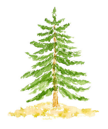 coniferous forest: Watercolor Fir Tree, Hand Drawn and Painted, Isolated on White