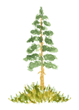 fir trees: Watercolor Fir Tree, Hand Drawn and Painted, Isolated on White