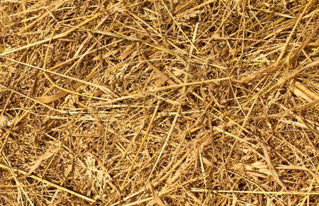 a straw: Dry Golden Hay or Straw Texture as Natural Background