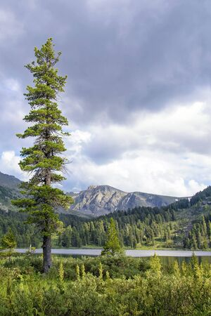 tall: Cold Summer Mountain Landscape with Tall Fir Tree and Tarn Stock Photo