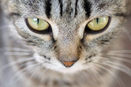 bewitch: Closeup of Hypnotic Cat Eyes