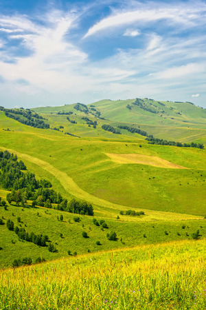 altay: Beautiful Summer Landscape: Green Hills Covered by Trees and Blue Sky with White Clouds Altay