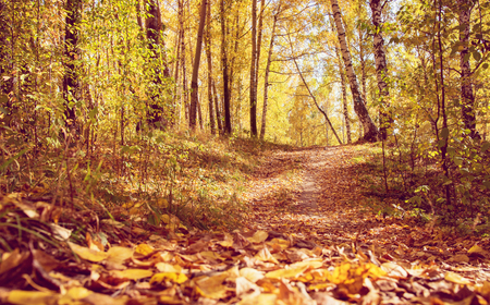 fall landscape: Pathway through Golden Fall Forest in Park As Autumn Landscape