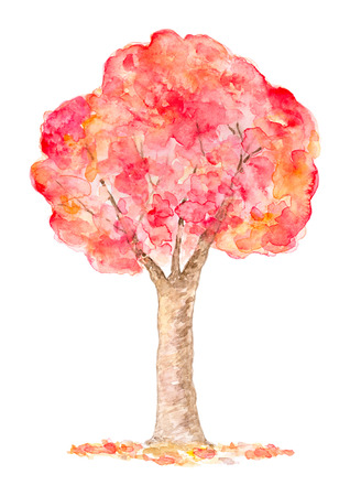 illustration isolated: Watercolor Autumn Tree, Hand Drawn and Painted, Isolated on White