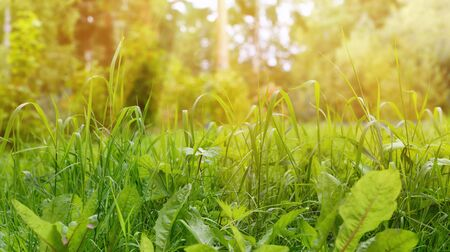 beauty in nature: Green Grass Border as Natural Background at Sunny Summer Day, Soft Focus Stock Photo
