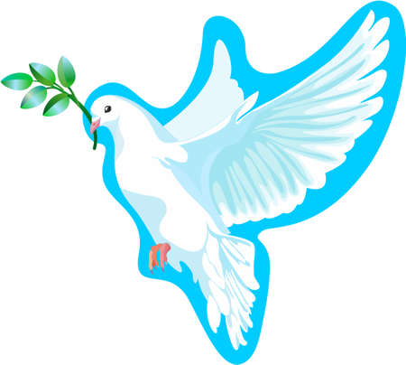 dove of peace: This is a white dove of peace, it is keeping the a green branch Illustration