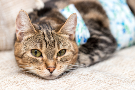 Cat with bandages recovers after surgery with intriguing expression
