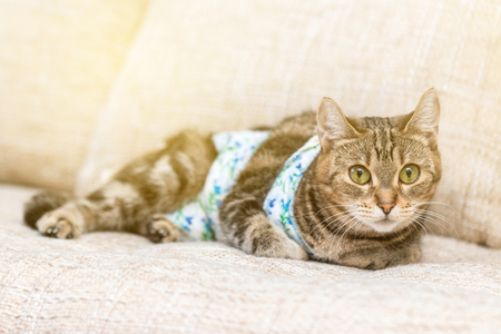 Cat with bandages recovers after surgery and looks amused with lighting Effects Banco de Imagens