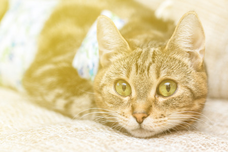 Close-up cat with bandages recovers after surgery and looks amused with lighting Effects