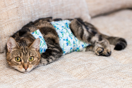 Cat with bandages recovers after surgery and looks amused