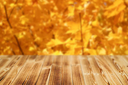 Wooden table with a blurry background of an autumn yellow forest.