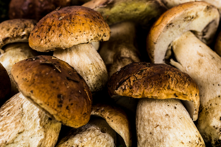 porcini: Porcini mushrooms close-up Stock Photo