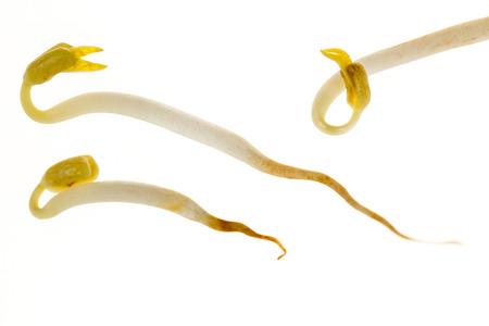 soja: Germogli di fagioli di soia isolate