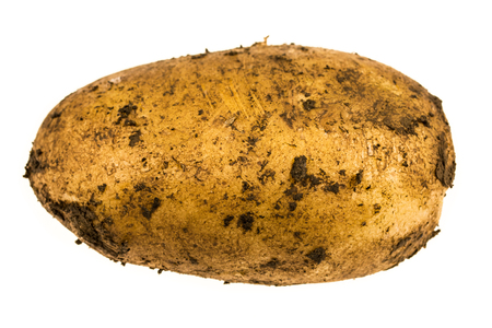 dirty: Dirty potato ground freshly picked from the field