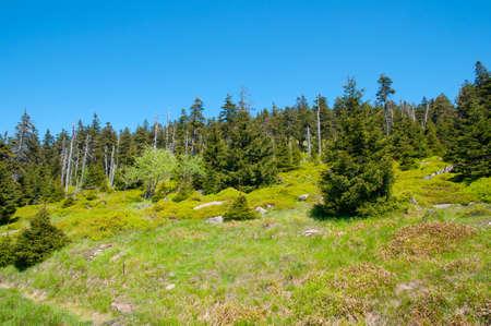 Wald im Nationalpark Harz in Deutschland Standard-Bild - 96318765