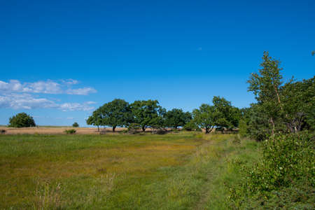 Beautiful nature landscape on Ulvshale on island of Moen in Denmark on a sunny summer day Stock Photo - 131321389