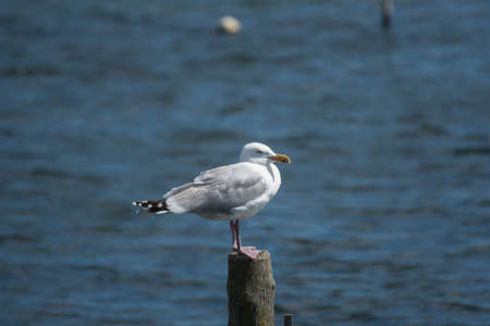 A seagull siting on a piece of wood near the sea