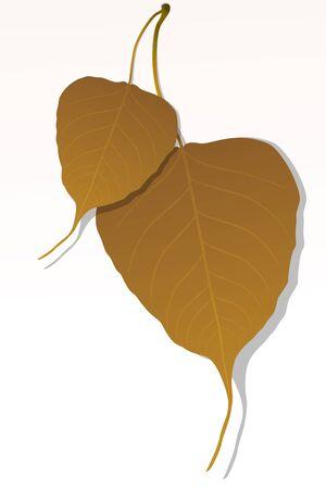 illustration of close up of peepal leaf illustration