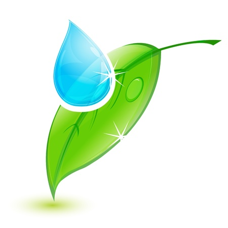 water plant: illustration of leaf with water drop on white background