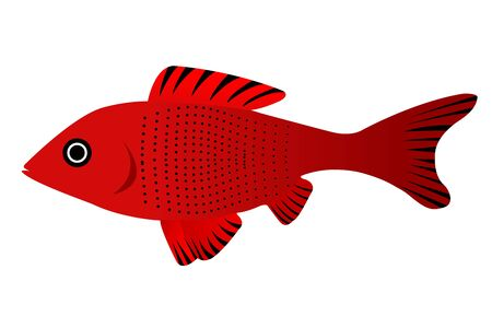 fantail: illustration of pretty fish on isolated background