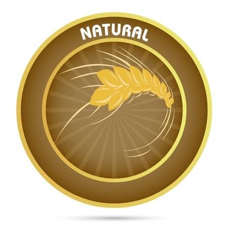 oat field: illustration of natural grain on white background