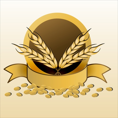 barley field: illustration of grain with ribbon on white background