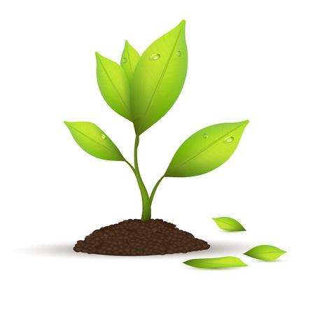 plants growing: illustrazione della struttura ad albero naturale su sfondo bianco