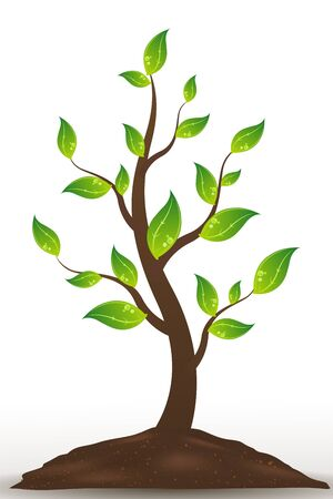 illustration of natural tree on white background Stock Vector - 9269516