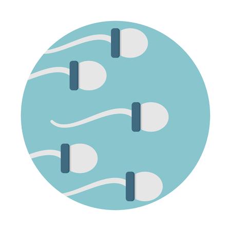 Gruppo di cellule spermatiche