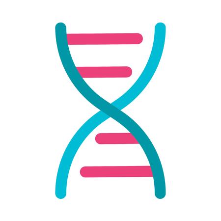 Deoxyribonucleic acid structure