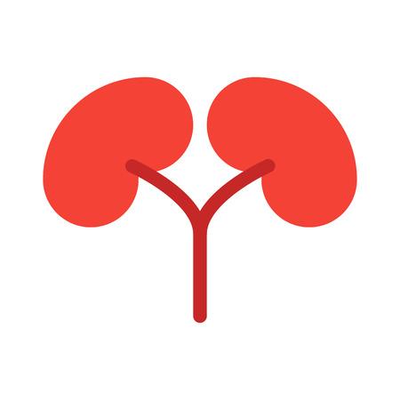 Kidneys - Nephrology Department Vector Illustration