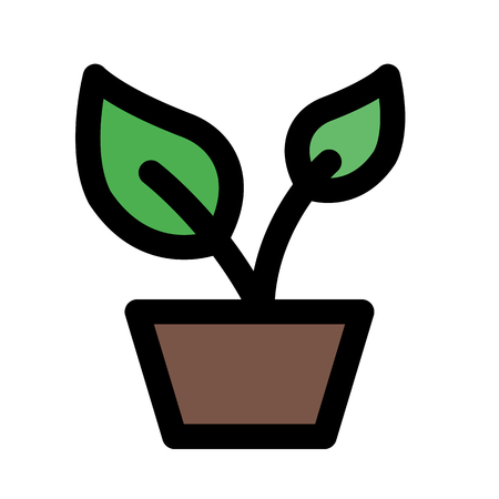 Seed sown plant