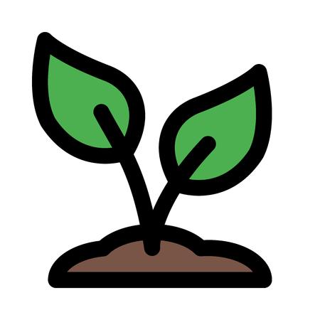 Pousse de graines de plantes