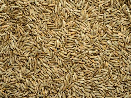 Seeds of rye