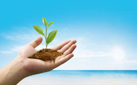 save environment: Plant in human hand against blue sky. Stock Photo