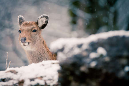 Deer in the white forest photo