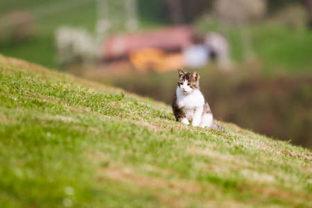 Little cat waiting in the grass