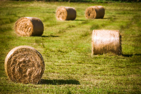 Round straw bales in harvested fields photo
