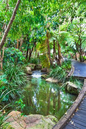 Australian subtropical rain forest in Queensland with a small pond